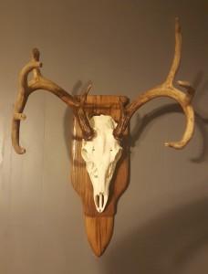 justins_deer